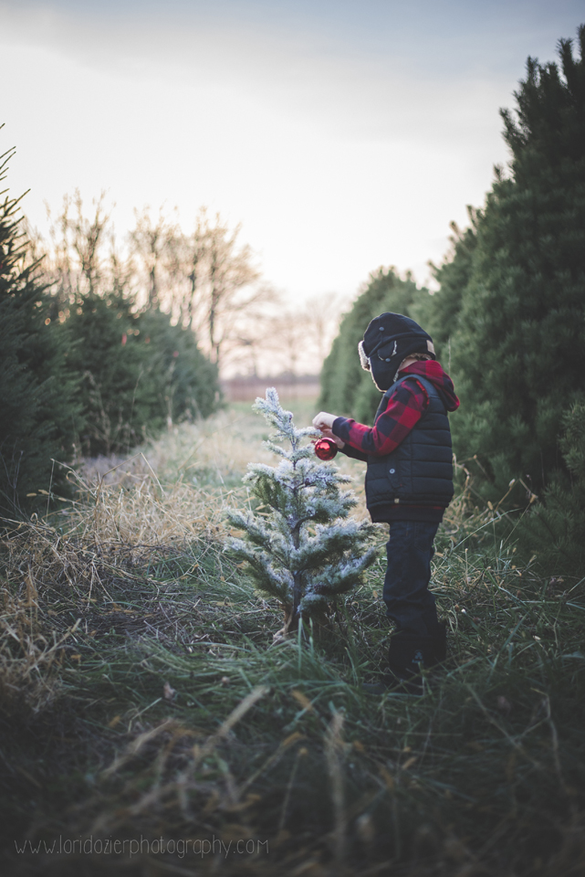 tree farm photos